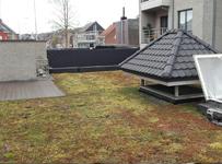 Soorten daken: het groendak